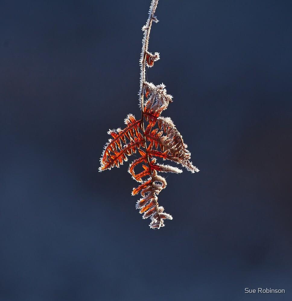 Frost on Bracken by Sue Robinson