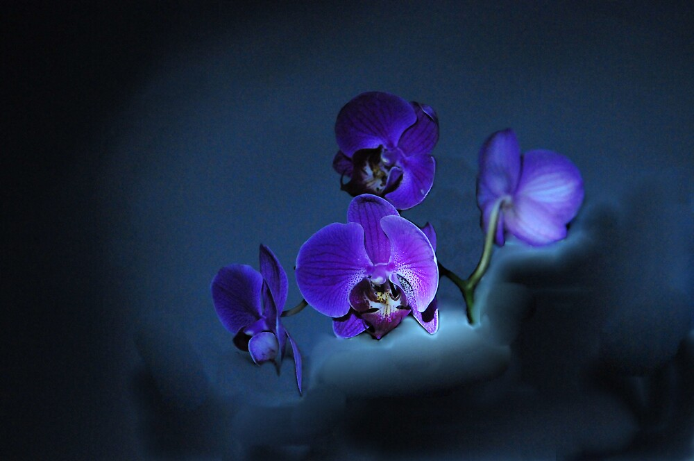 Orchid Rhapsody by dumbomsa