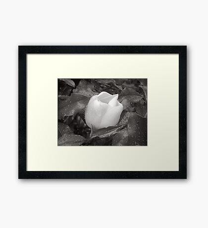 White Rain Framed Print