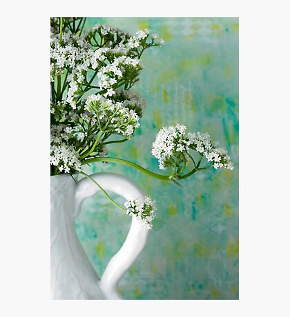 White Valarian Flowers Still Life  Photographic Print
