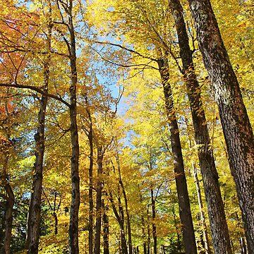 Autumn sun through the trees by croper