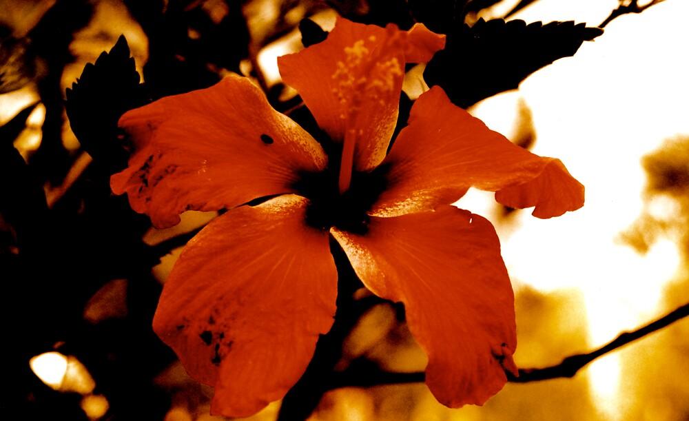golden hibiscus by pigmoose