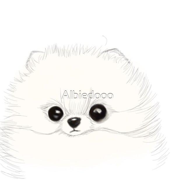 Pomeranian by Albiedooo