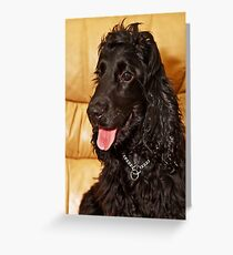 Black Cocker Spaniel Greeting Card