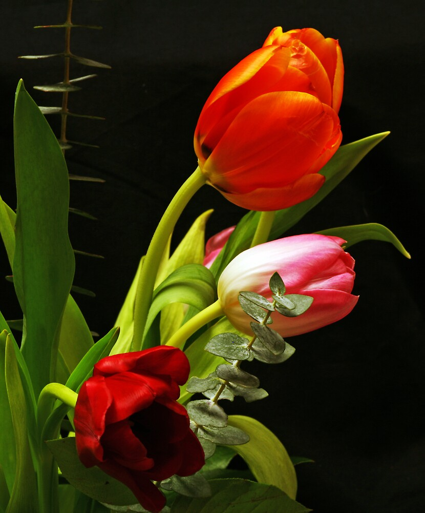 More Colorful Tulips by Swede