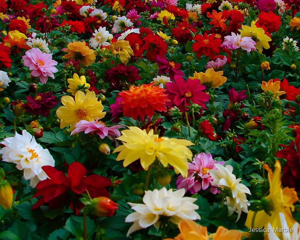 Flower Garden by Jessica  Marble