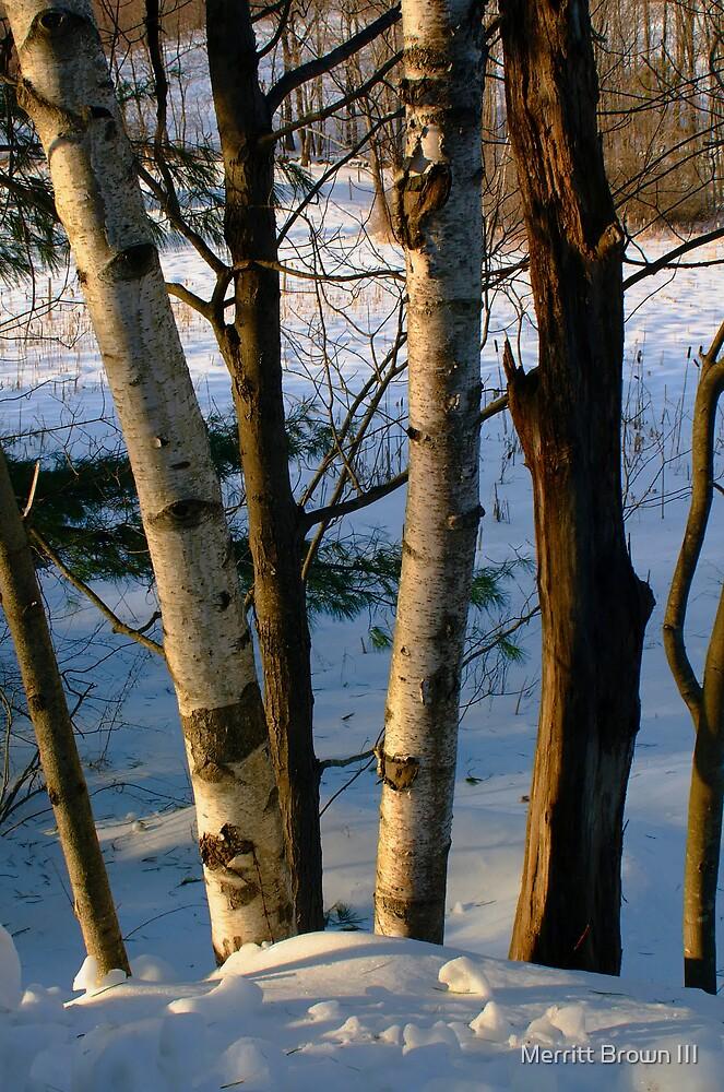 N.H. Trees by Merritt Brown III