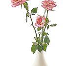Margaret's Roses by Ann Garrett