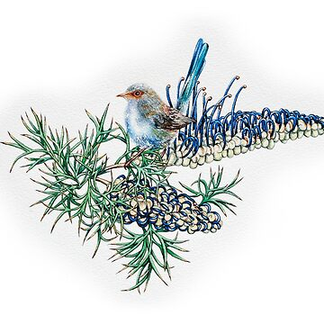 Grevillea spinosa & variegated fairy wren by MCColyer