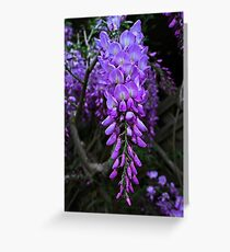 Blooming Wisteria Greeting Card