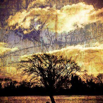 Tree by kuaile