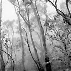 My View of Twenty Four April - New England National Park by Kitsmumma
