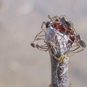 Spiders by melaniedion