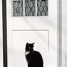 On the Doorstep by Tracy Riddell