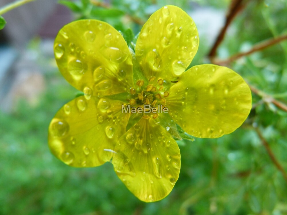 Bright As Sunshine In a Rain Shower by MaeBelle