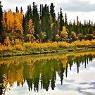 Yukon Autumn by Linda Bianic