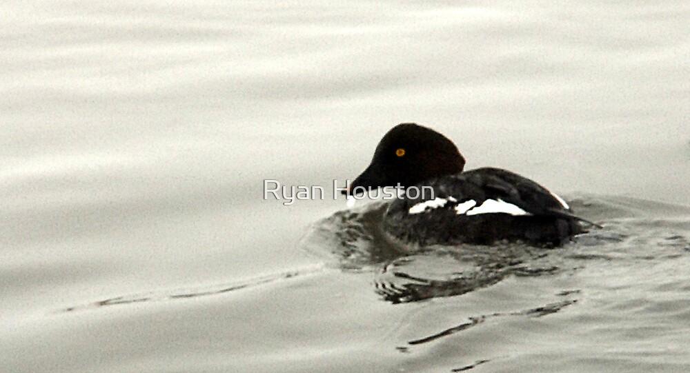 Goldeneye Duck by Ryan Houston