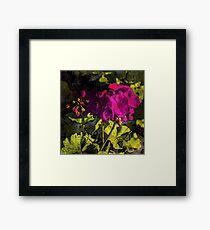 Geranium Floral Art Framed Print