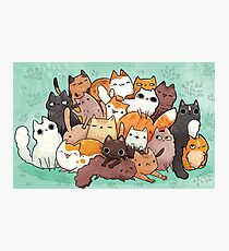 Pile o cat  Photographic Print
