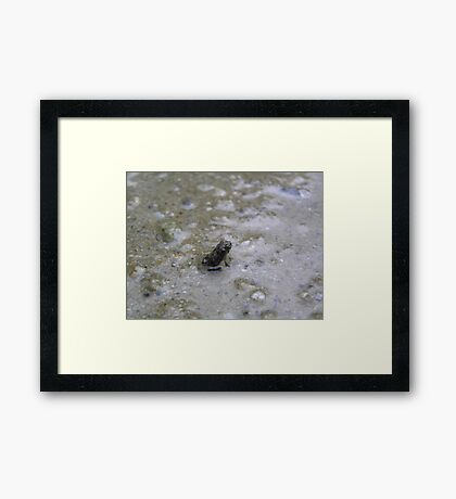 The worlds tiniest frog Framed Print