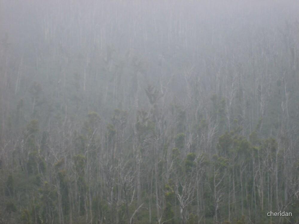 Ghost Trees by cheridan