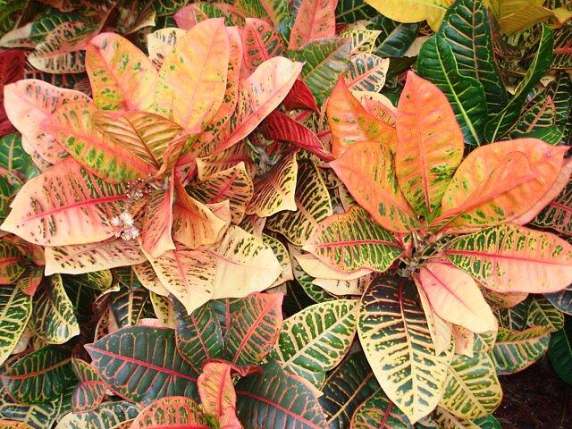 Colorplant by Dario  da Silva