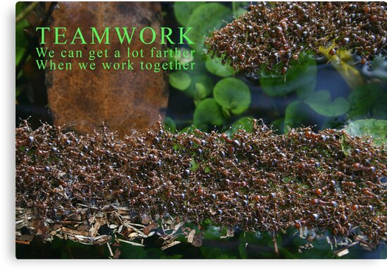 Teamwork by MMerritt