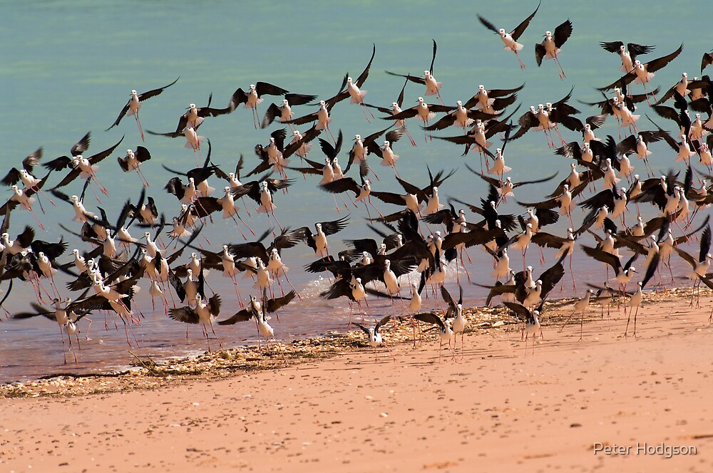 Taking Flight by Peter Hodgson
