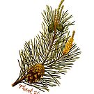 Thank You Scots Pine by EvePenman