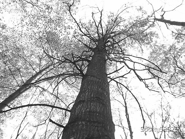 Blk & Wht Tree by Sporty52375