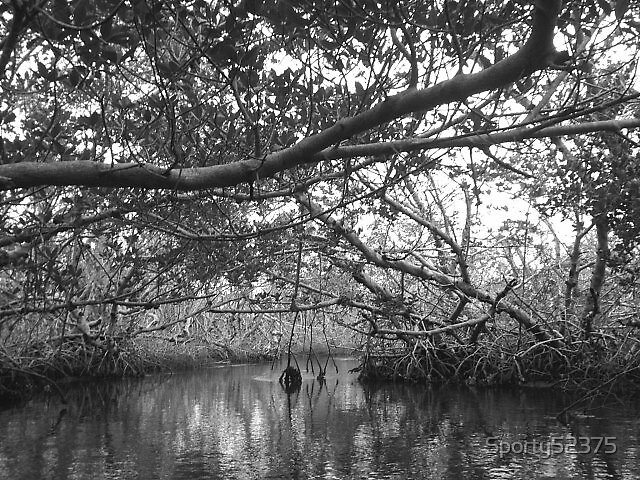 Kayaking in FL by Sporty52375