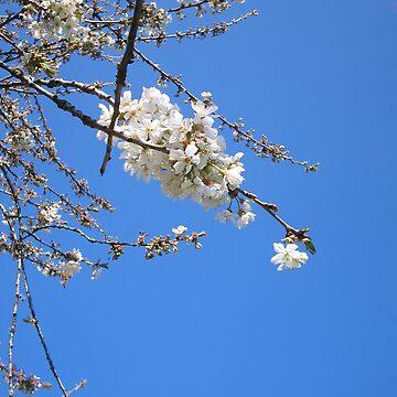 Cherry Blossom Sky by artordie