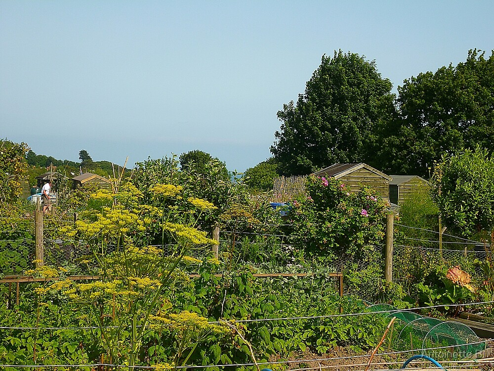 The allotments in July  by Antoinette B