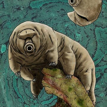 Tardigrade - Water Bear by absurdboy