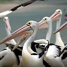 Oh Those Pelicans © Vicki Ferrari by Vicki Ferrari