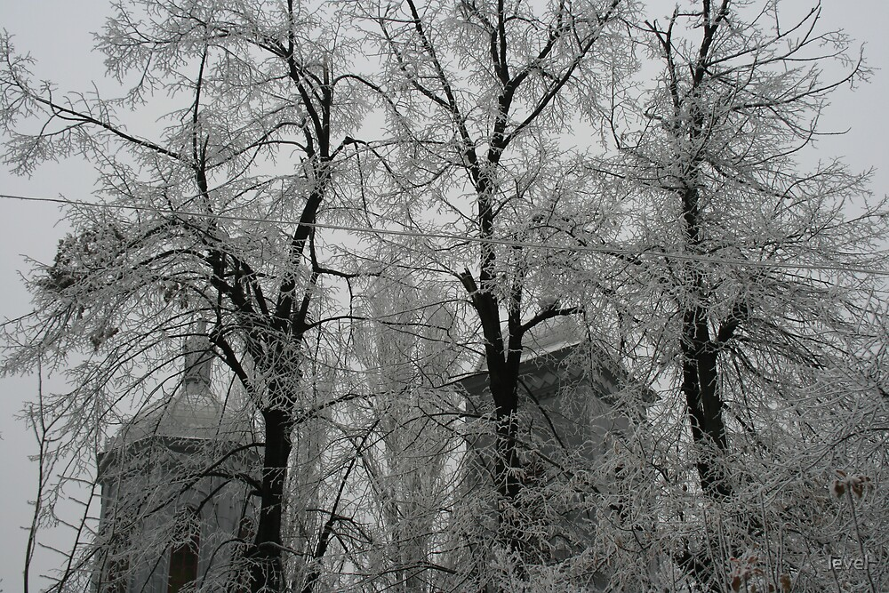 Frosted trees and church by level