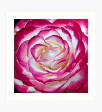 Illuminated Rose Art Print