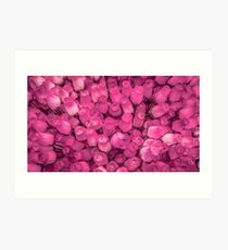 Dozens of Miniature Pink Roses Art Print