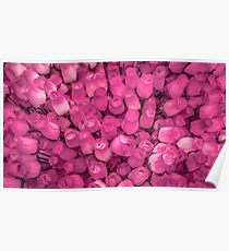 Dozens of Miniature Pink Roses Poster