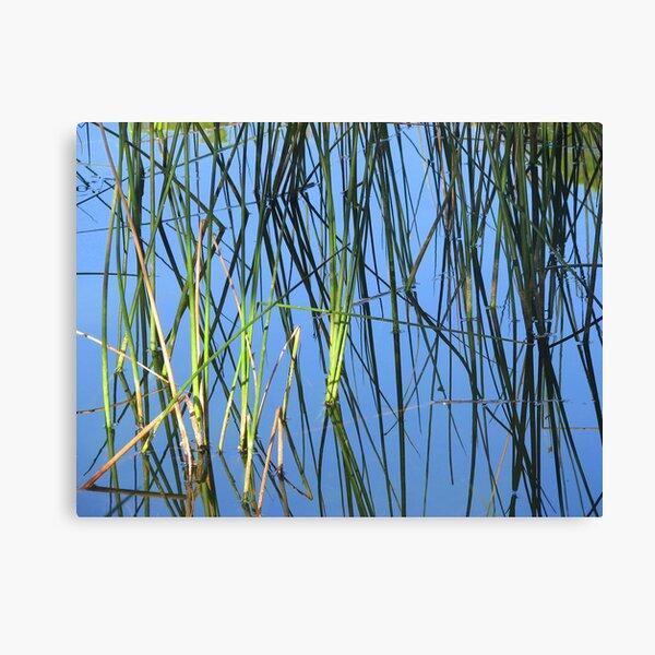 Wetland Reflection Canvas Print