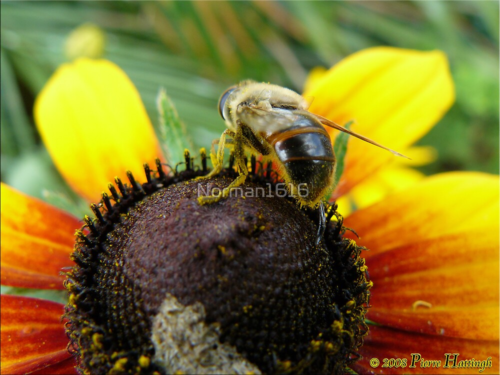Nectar by Norman1616