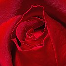 Red Rose Bud by Webitect