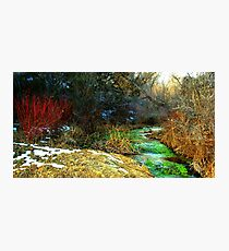 TechniCOLORED NATURE  Photographic Print