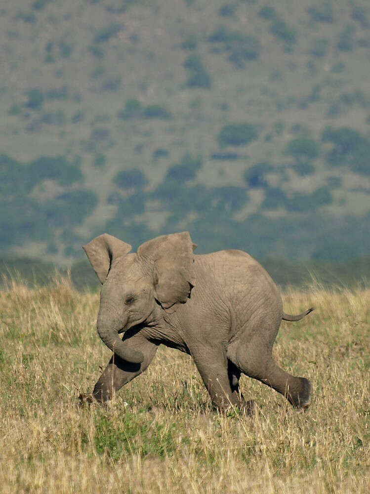 Quot Baby Elephant Running Quot By David Odd Redbubble
