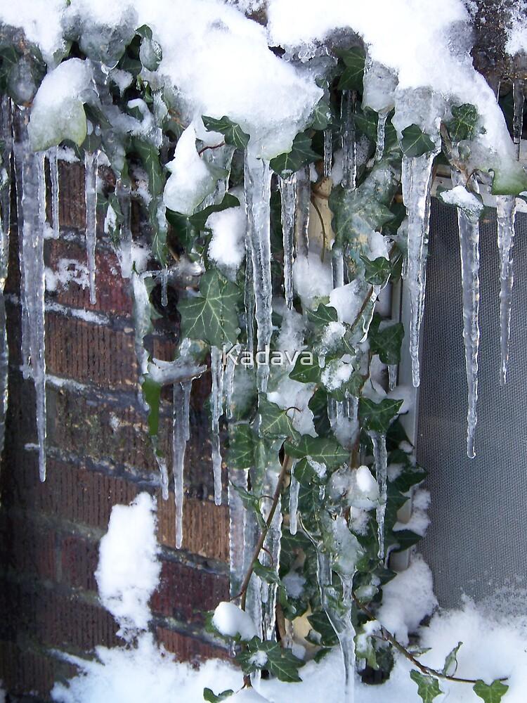 Frozen Ivy by Kadava