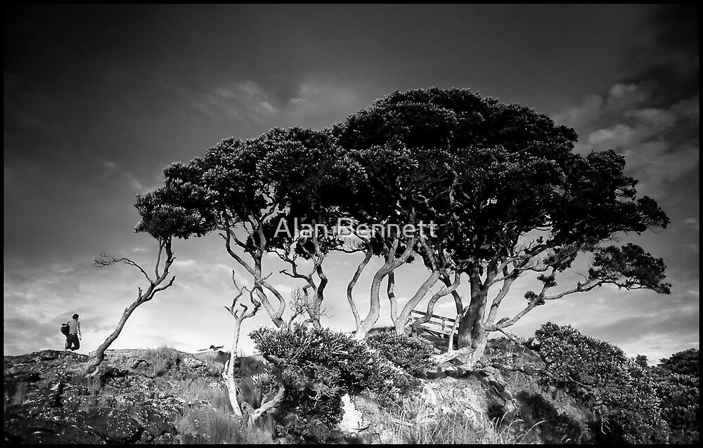 NZ Tree by Alan Bennett