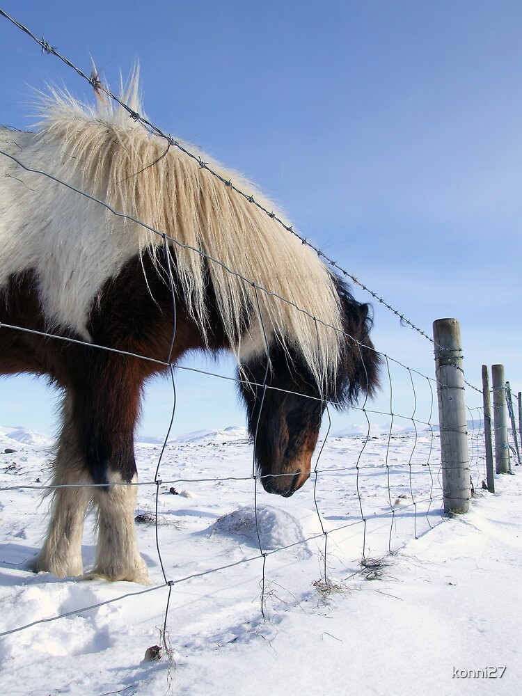 Winter horse. by konni27
