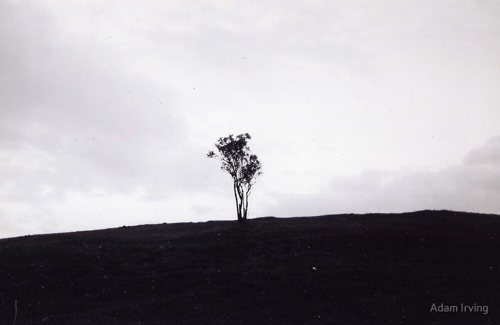 Little tree, Radcliffe, 1998 by Adam Irving