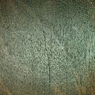 Wood Texture no. 1 by artddicted