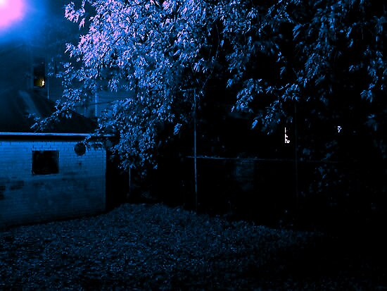 Sky Blue Maple by Tessi